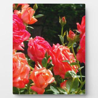 Romantische korallenrote Rosen Fotoplatte