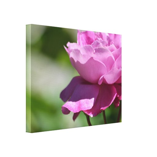 Romantische rosa Rose Leinwand Drucke