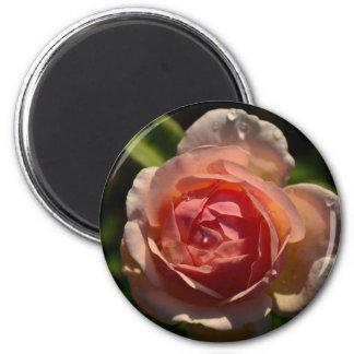 Romantische rosa Rose mit Regentropfenmagneten Runder Magnet 5,7 Cm