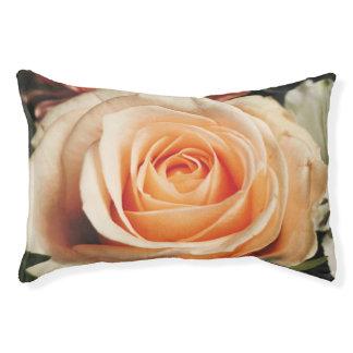 Romantische Rosen-Rosa-Rosen-Frühlings-Blume mit Haustierbett