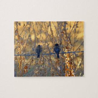 Romantische Spatzenvogelpaare auf einem Draht, Puzzle