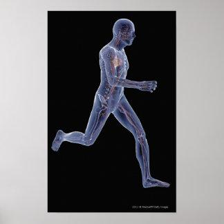 Röntgenstrahl des Gefäßsystems in einem laufenden Poster