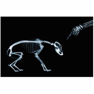 Röntgenstrahl-Skelett-blauer schlechter Hund Freistehende Fotoskulptur