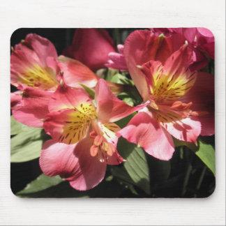 Rosa Alstroemeria-Blumen-Lilien-Blumen-Fotos Mousepads