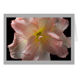 Rosa Amaryllis der Blume 25 Karte