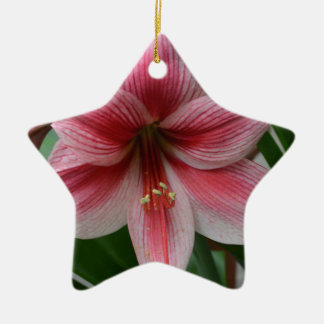 Rosa Amaryllis Keramik Ornament