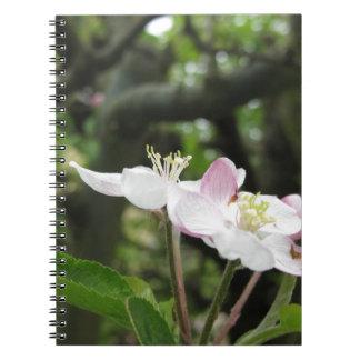 Rosa Apfel-Blume im Frühling. Toskana, Italien Notizblock