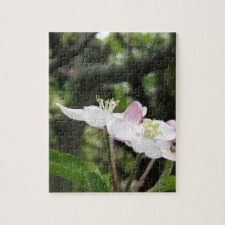 Rosa Apfel-Blume im Frühling. Toskana, Italien Puzzle