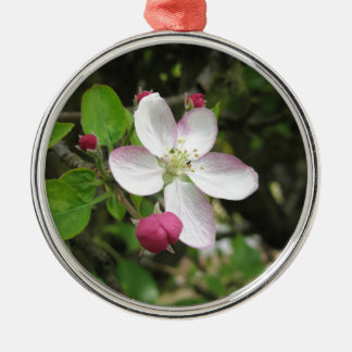 Rosa Apfel-Blume im Frühling. Toskana, Italien Silbernes Ornament