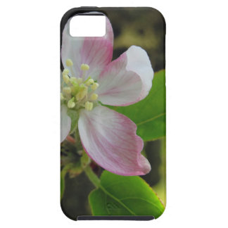 Rosa Apfelblüten iPhone 5 Schutzhülle