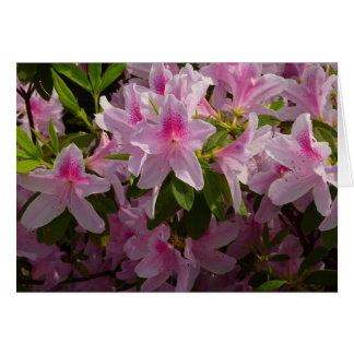 Rosa Azaleen-Bush-Frühlings-Blumen Karte