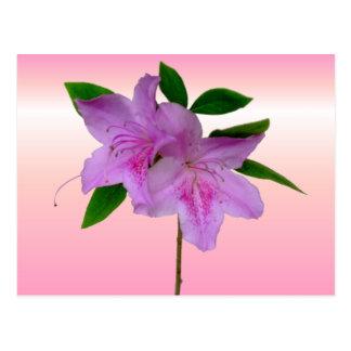 Rosa Azaleen-Single-Blume Postkarte