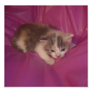 Rosa Baby-Flecken Fotodruck