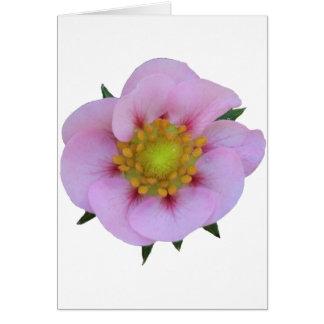 Rosa Blume Karte