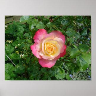 Rosa Blume Poster