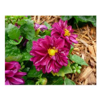 Rosa Blume Postkarte