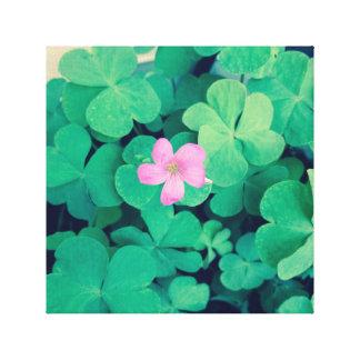 Rosa Blumen-Blüte auf Klee Leinwanddruck