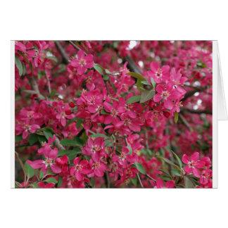 Rosa Blumen des Apfels Grußkarte