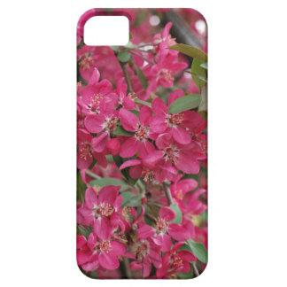 Rosa Blumen des Apfels iPhone 5 Case