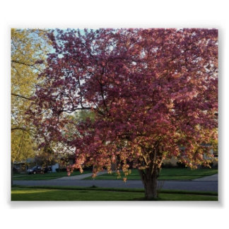 Rosa Blumen-Holzapfel-Baum Poster