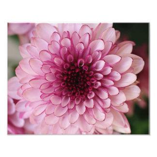 Rosa Blumen-photographischer Druck