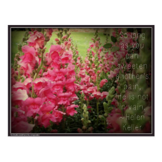 Rosa Blumen-u. Helens Keller Güte-Zitat Postkarte