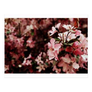 Rosa Blütenpostkarte Postkarte