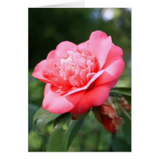 Rosa Camelia Blumen-Gruß-Karte, Anmerkungs-Karte Karte