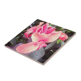 Rosa Badezimmer Fliesen, Rosa Badezimmer Keramikfliesen