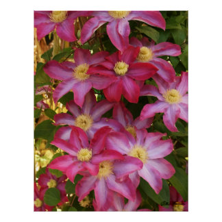 Rosa Clematis 2 Poster