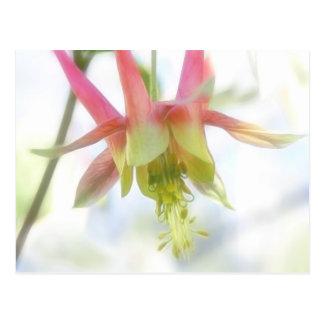 Rosa Columbine-Blume Postkarte