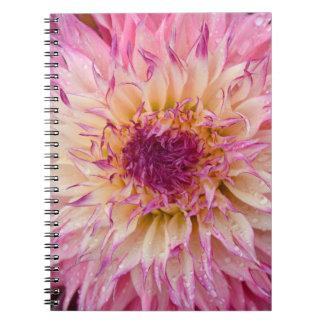 Rosa Dahlie-Blumendrucknotizbuch des Singles Spiral Notizblock