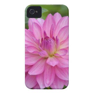 Rosa Dahlie-Schönheit iPhone 4 Case-Mate Hülle