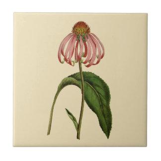 Rosa Echinacea-botanische TAN-Keramik-Fliese Keramikfliese
