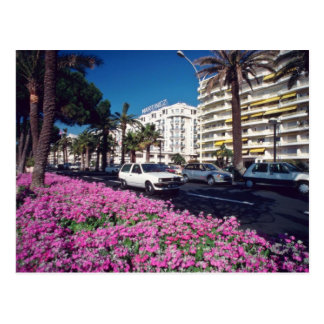 Rosa Elegant Boulevard de Croisette, Cannes-Blume Postkarte