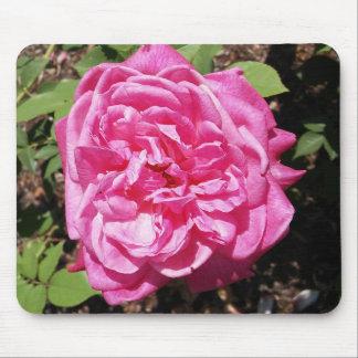 Rosa englische Rose Mousepad