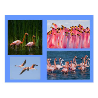rosa Flamingopostkarte