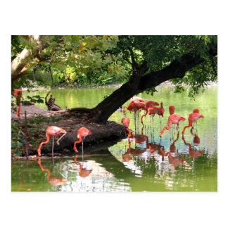Rosa Flamingos 7124 Postkarte