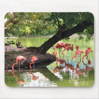 Rosa Flamingos Mousepad