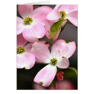 Rosa Frühlings-Hartriegel-Blumen Karte