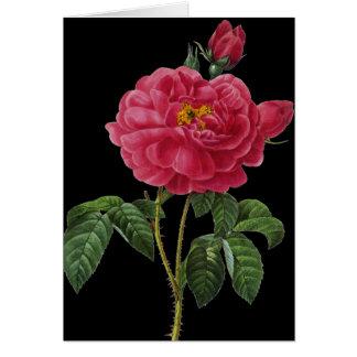 Rosa Gallica Karte