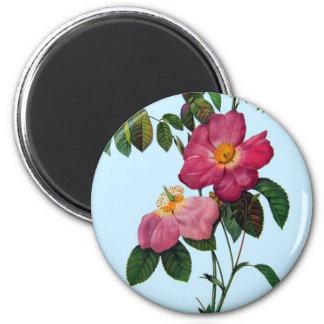 Rosa gallica, Pierre Joseph Redouté Runder Magnet 5,7 Cm
