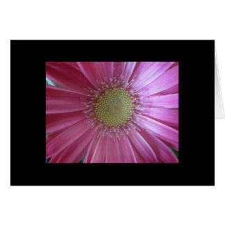 Rosa Gänseblümchen-Schönheit Karte