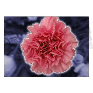 Rosa Gartennelke Karte