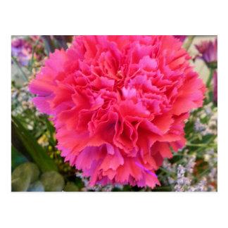 Rosa Gartennelke Postkarten