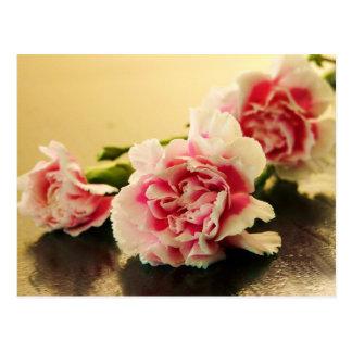 Rosa Gartennelken Postkarte
