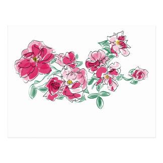 Rosa Gartennelken Postkarten
