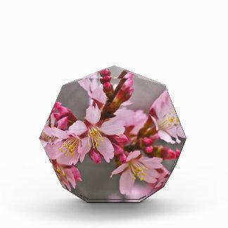Rosa gegen grauer Himmel-japanische Kirschblüten Acryl Auszeichnung