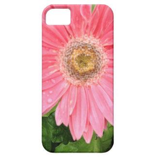 Rosa Gerber Gänseblümchen iPhone 5 Schutzhülle