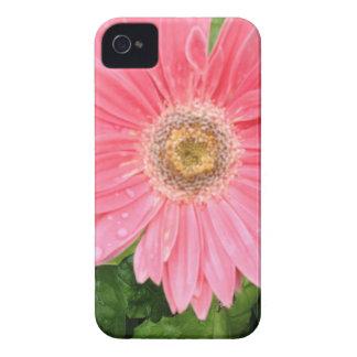 Rosa Gerber Gänseblümchen iPhone 4 Case-Mate Hüllen